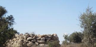Forêts du mochav Amatsia