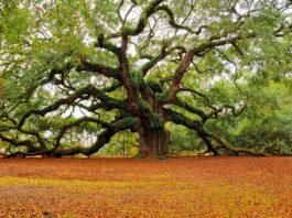 le « nouvel an des arbres »